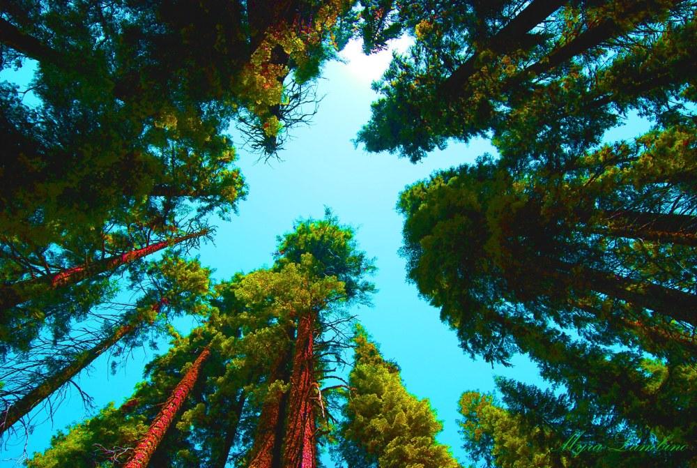 1up.SEQUOIA NAT'L FOREST